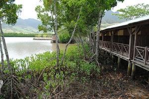 Mangroves at La Case du Pecheur