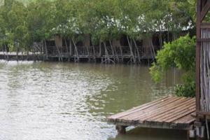 Mangroves at Pointe des Canons at La Case du Pecheurs